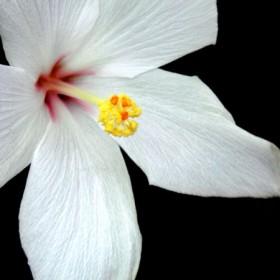 HO014 Tropical Flower