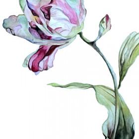 HO024 Botanical Tulip