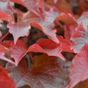 SC075 Autumn Leaves