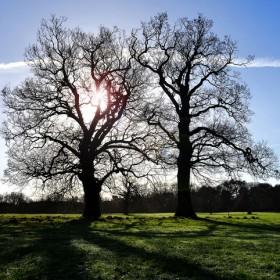 SC083 Tree III