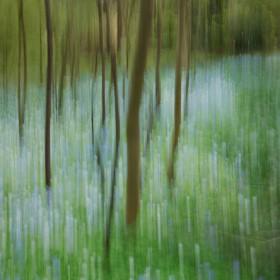 SC101 Abstract Landscape VI