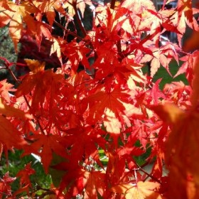 WA052 Autumn I