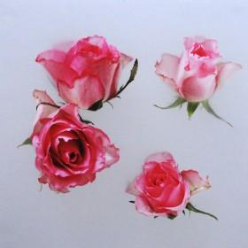 ME128 Rosebuds